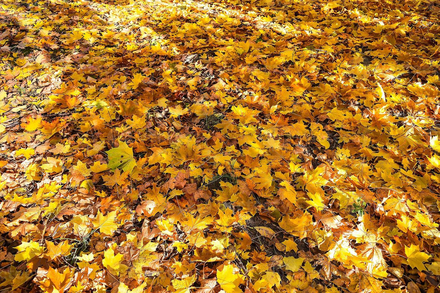 Herbstblätter. foto