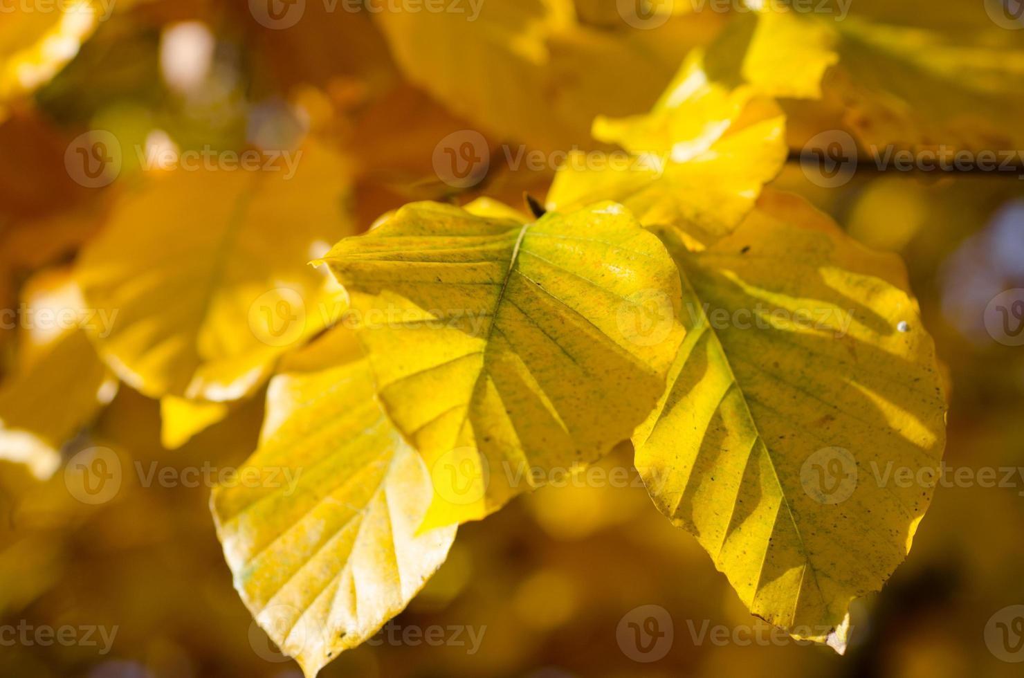 bunter Herbst foto