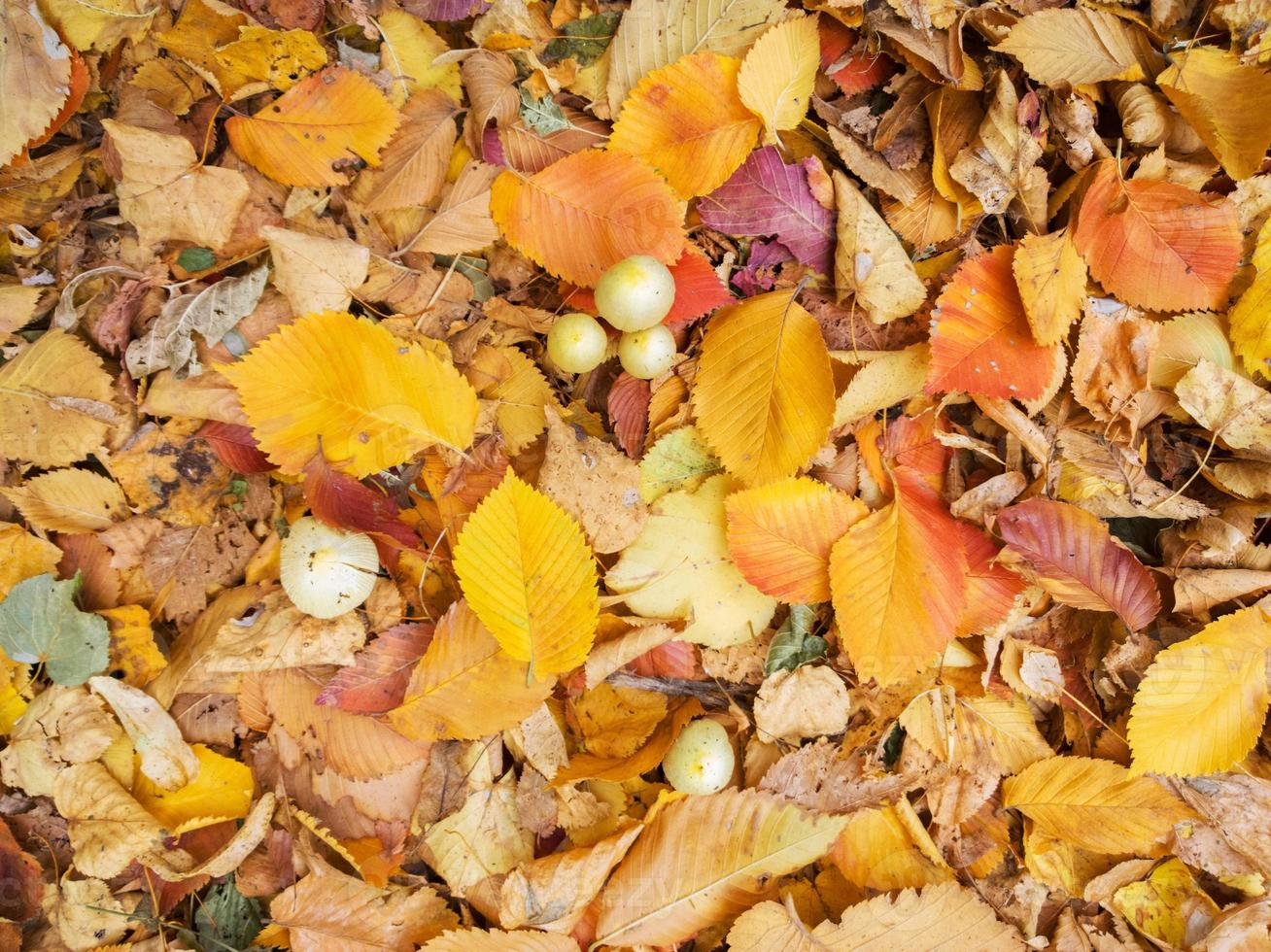 Herbstblatt. foto
