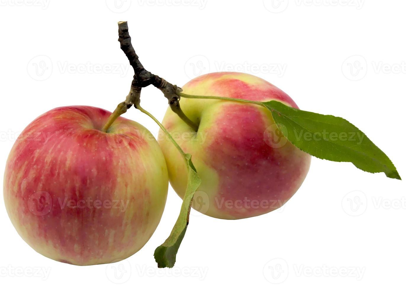 Herbstäpfel. foto