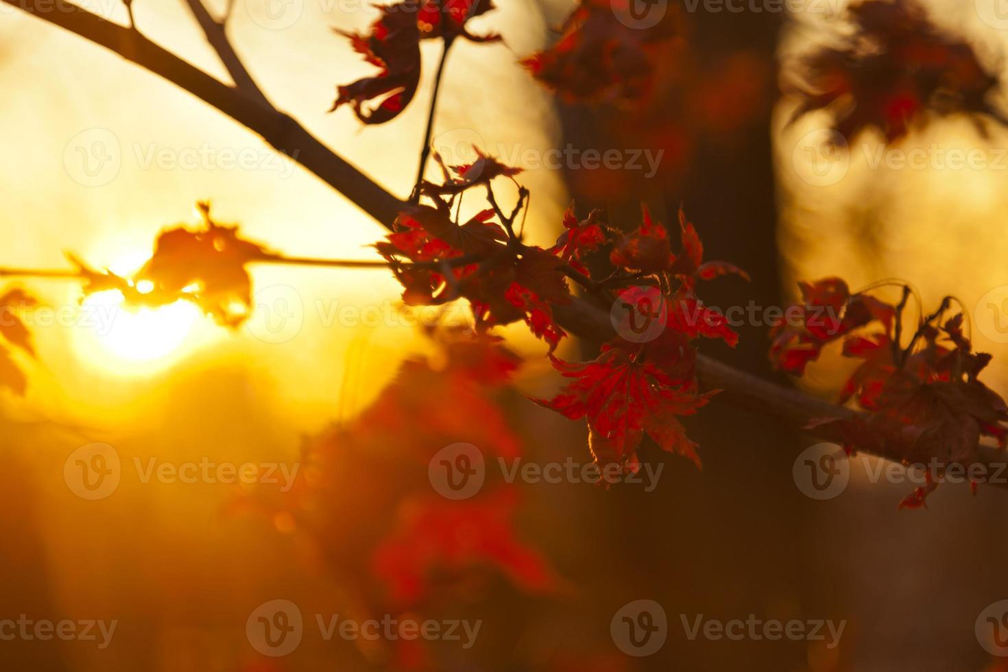 Herbstblätter foto