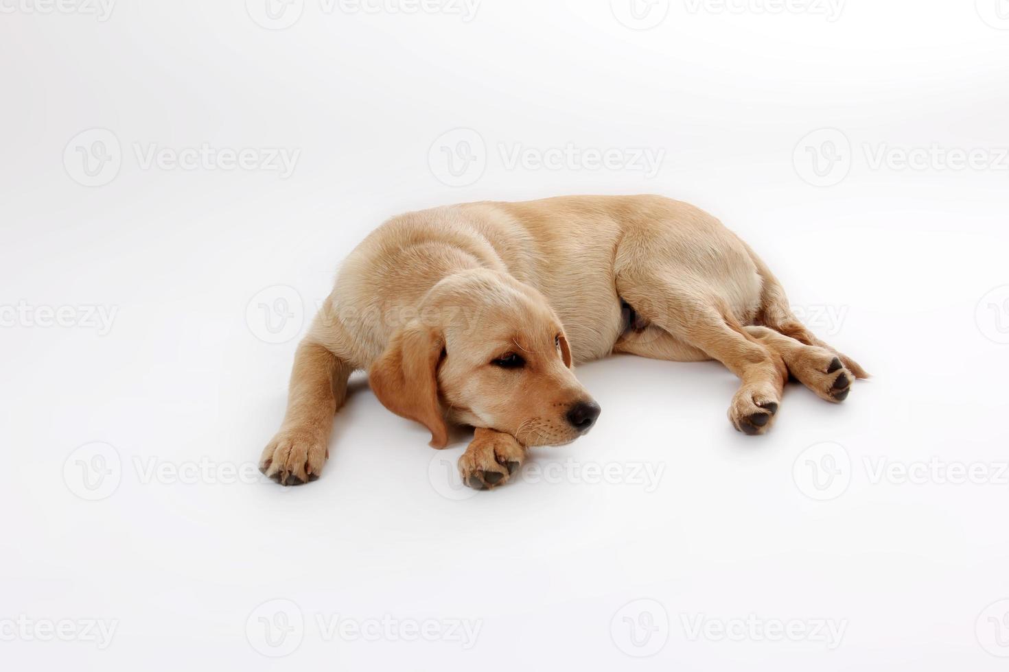 hunde-63 foto