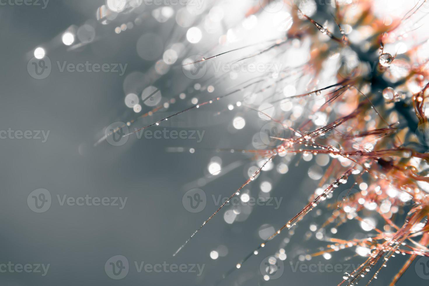 Unschärfe und Weichzeichnung der Grasblume mit Wassertropfen foto