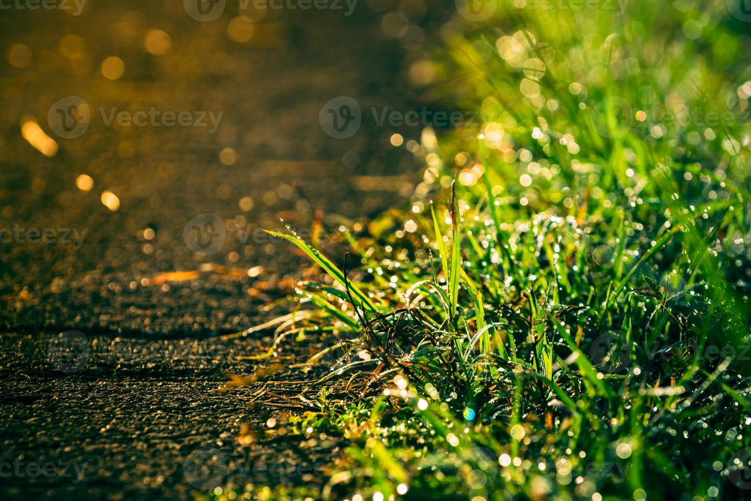 Retro von Gras neben der Straße mit Dewdros foto