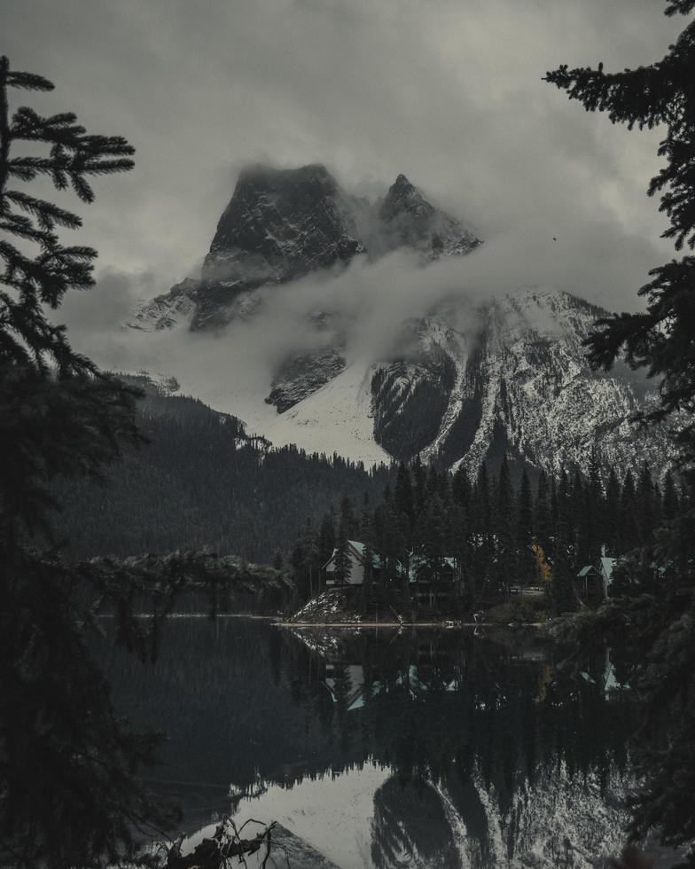 Kiefern neben schneebedeckten Bergen foto