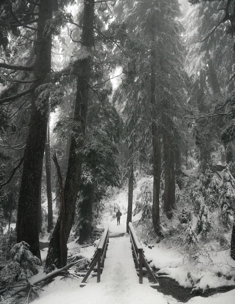 schneebedeckter Weg zwischen Bäumen in Kanada foto