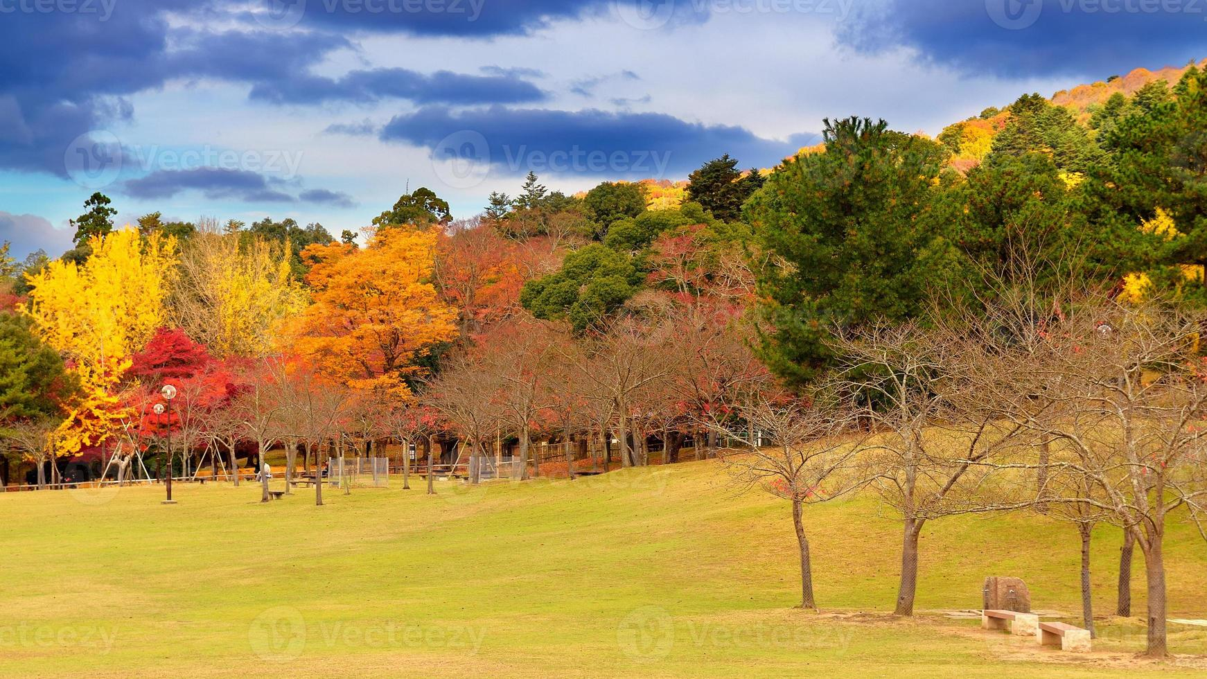 Herbstfarben in Nara foto