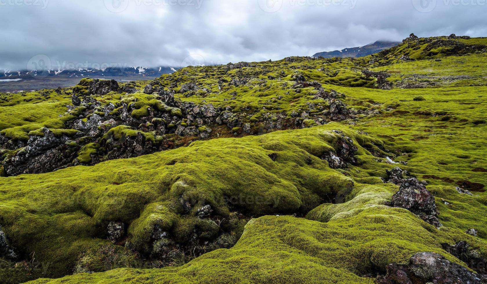 Lavafeld mit grünem Moos in Island foto