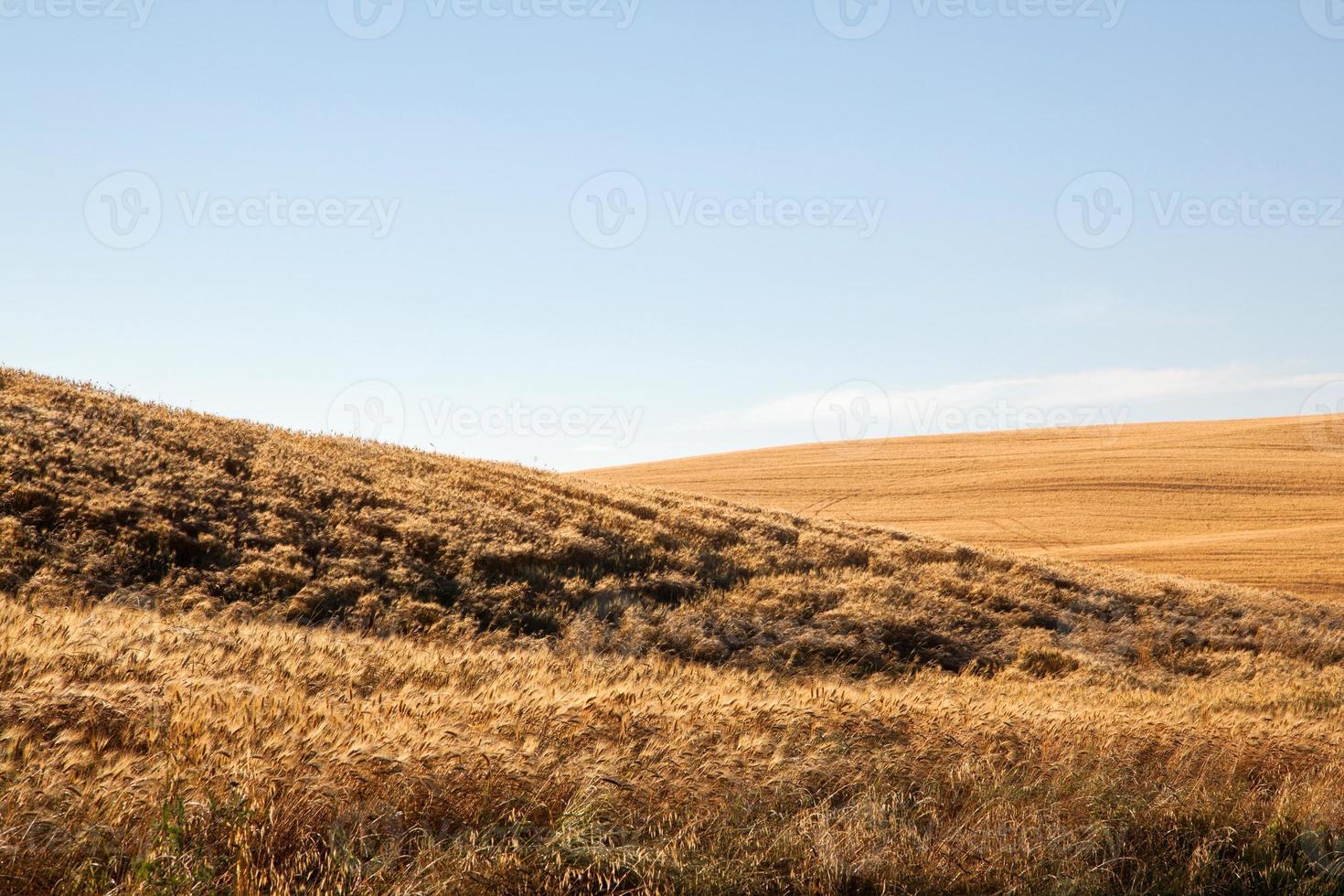 Felder aus Gold foto