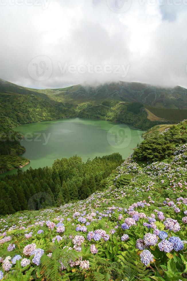 Blumen auf dem Vulkan foto