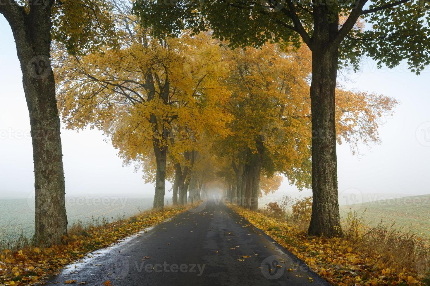 Herbststraße in Nordpolen foto