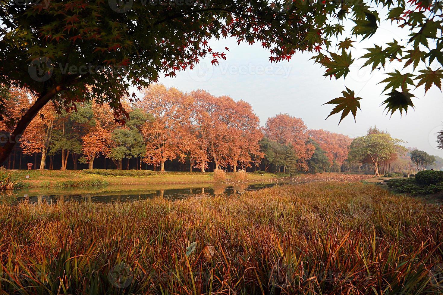 Herbstlaub in der Nähe eines Baches foto