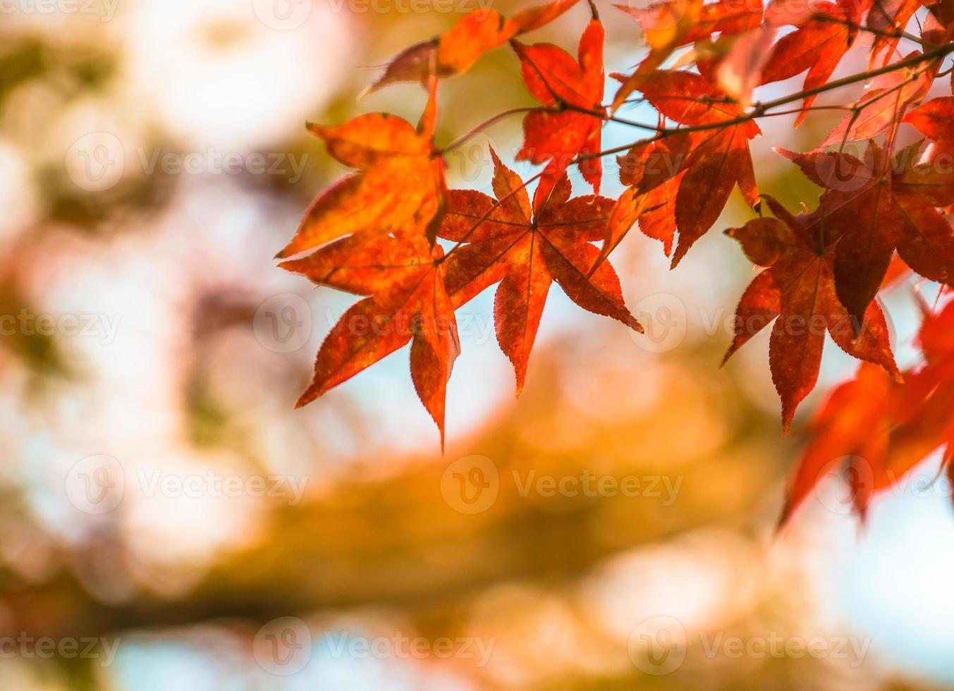 Herbstlaub, sehr flacher Fokus foto