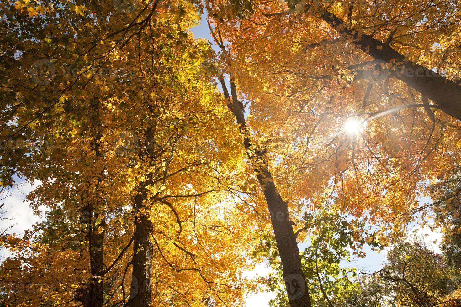 Herbstlaub in der Natur foto