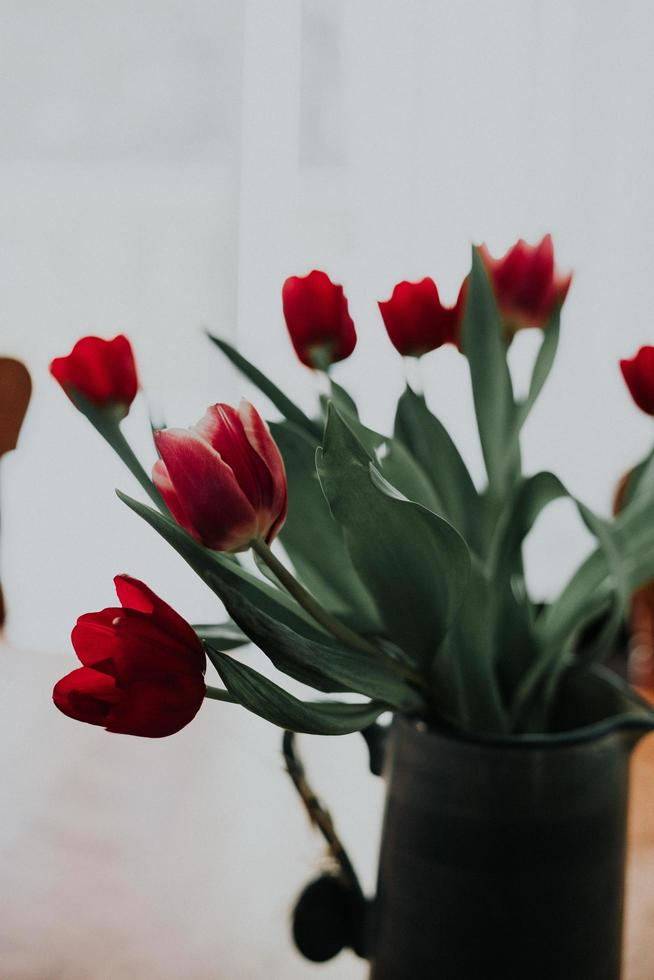 Makroaufnahme von roten Tulpen foto