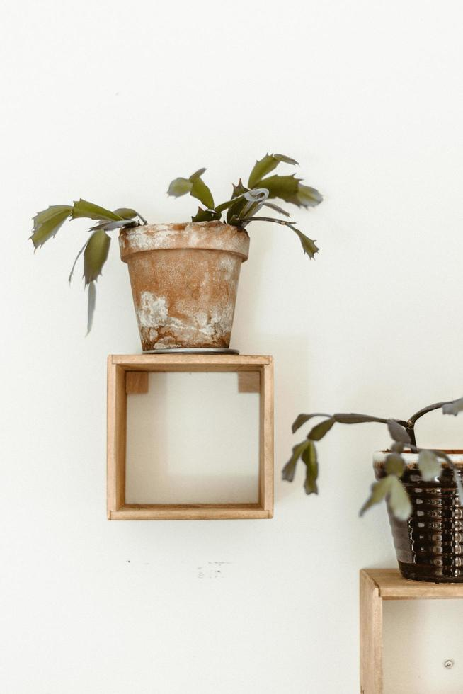 braune Topfpflanze mit grünen Blättern foto