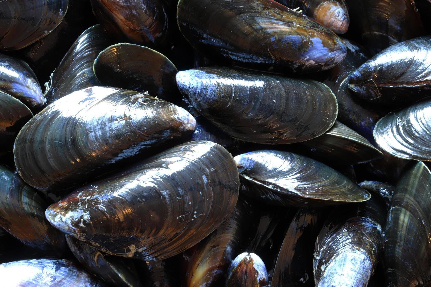 Makrofotografie von Muscheln für Lebensmittelhintergrund foto