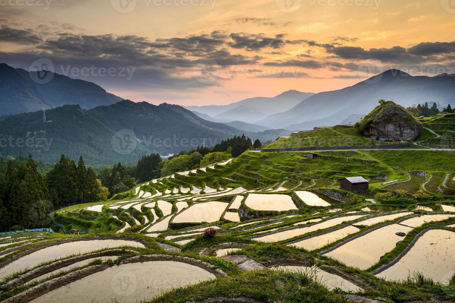 Reisfelder in Japan foto