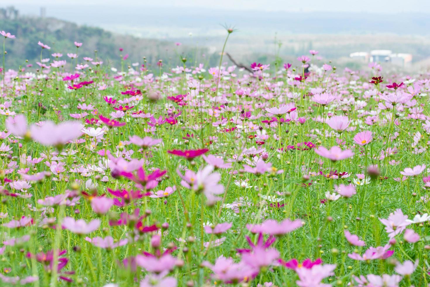 Blumenfeld im Sommer foto