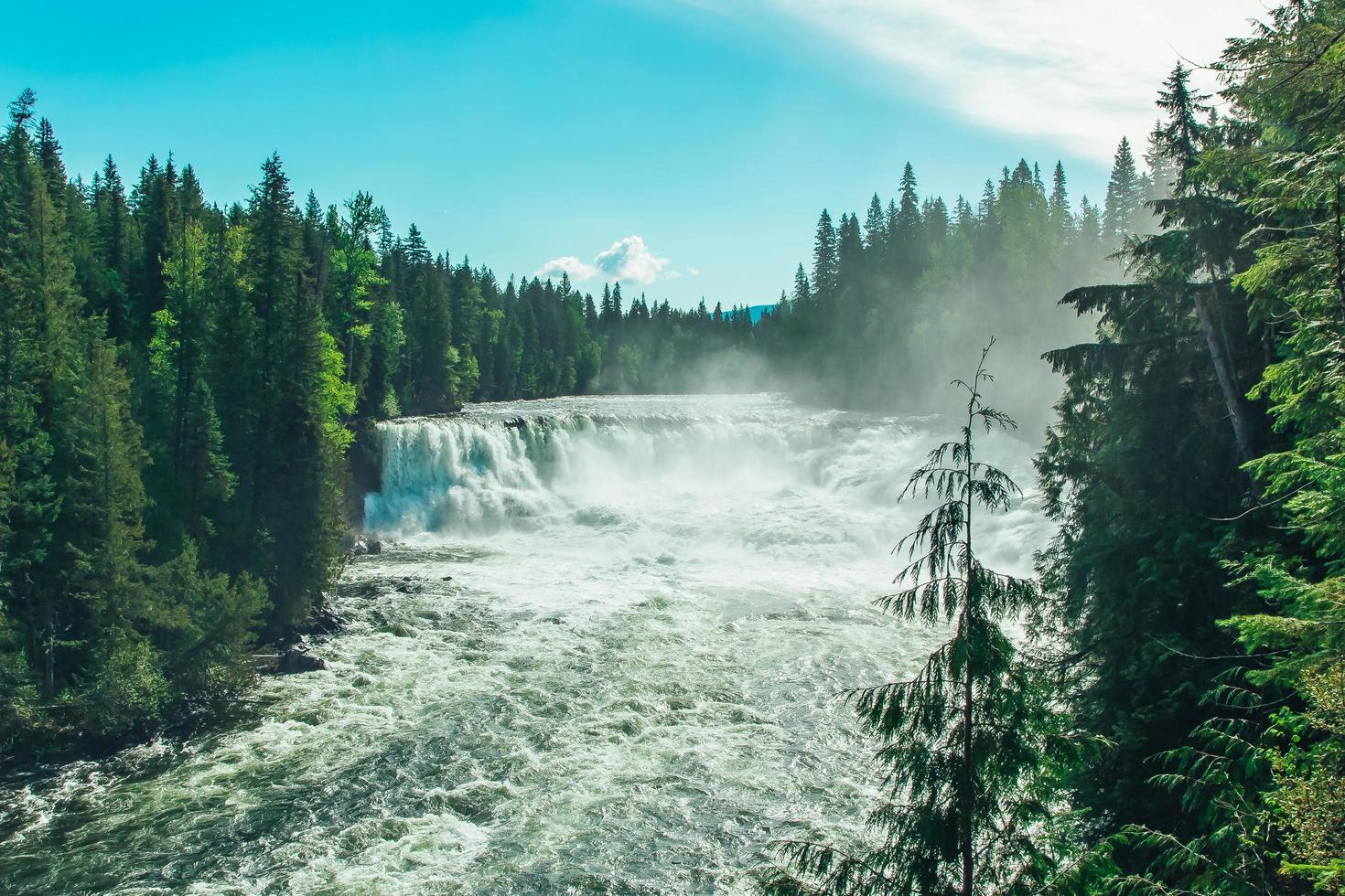 grüne Kiefern in der Nähe eines Wasserfalls foto