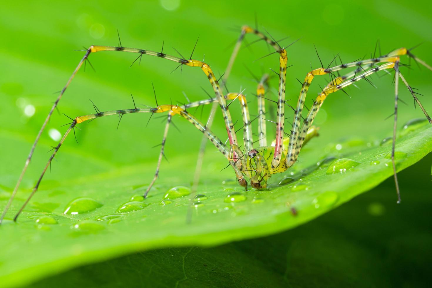 Spinne auf einem grünen Blatt foto