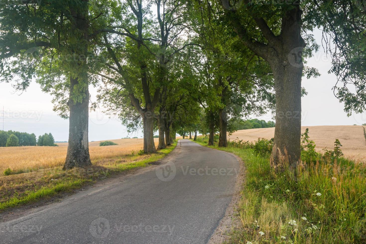 Asphaltstraße in der Nähe von Feldern foto