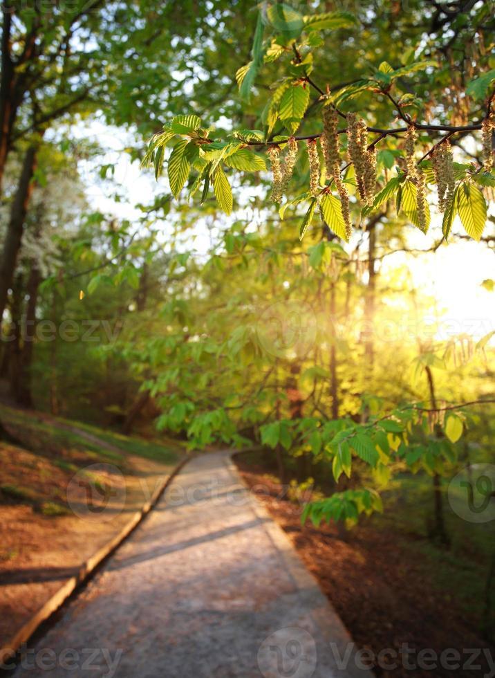 Straße im grünen Stadtpark, auf Sonnenuntergang foto