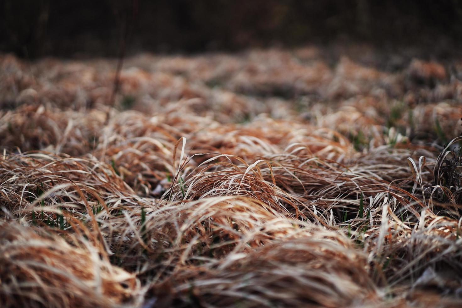 braunes Gras im Garten foto
