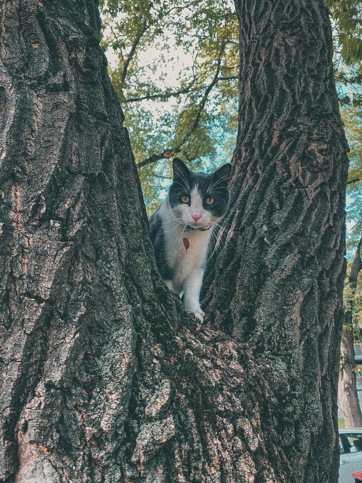 weiße und schwarze Katze in einem Baum foto