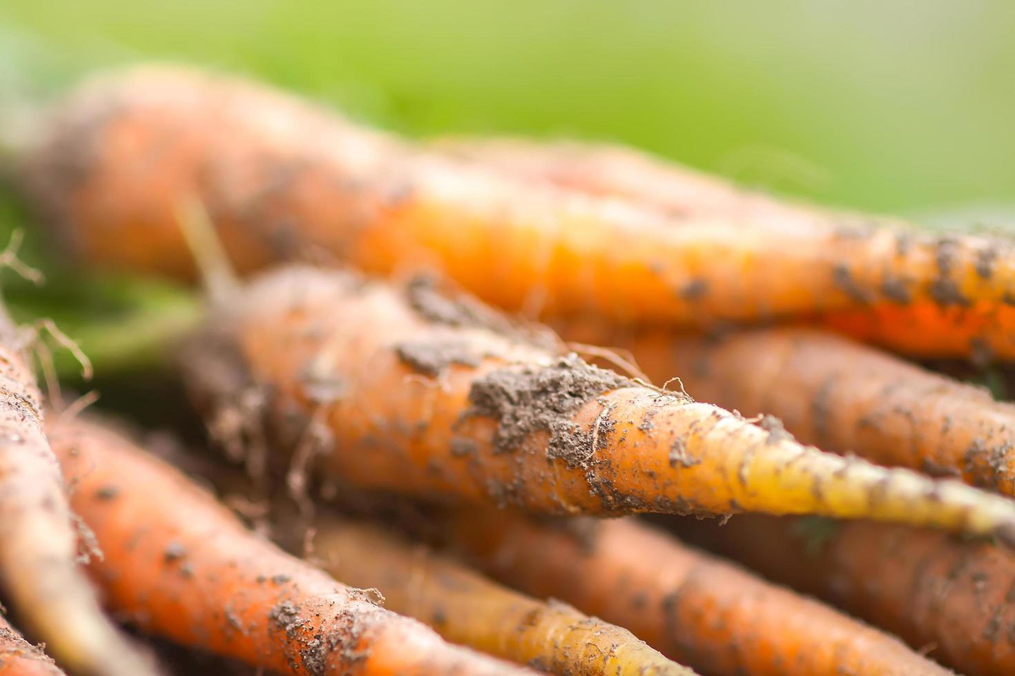 Nahaufnahme von frischen Karotten foto
