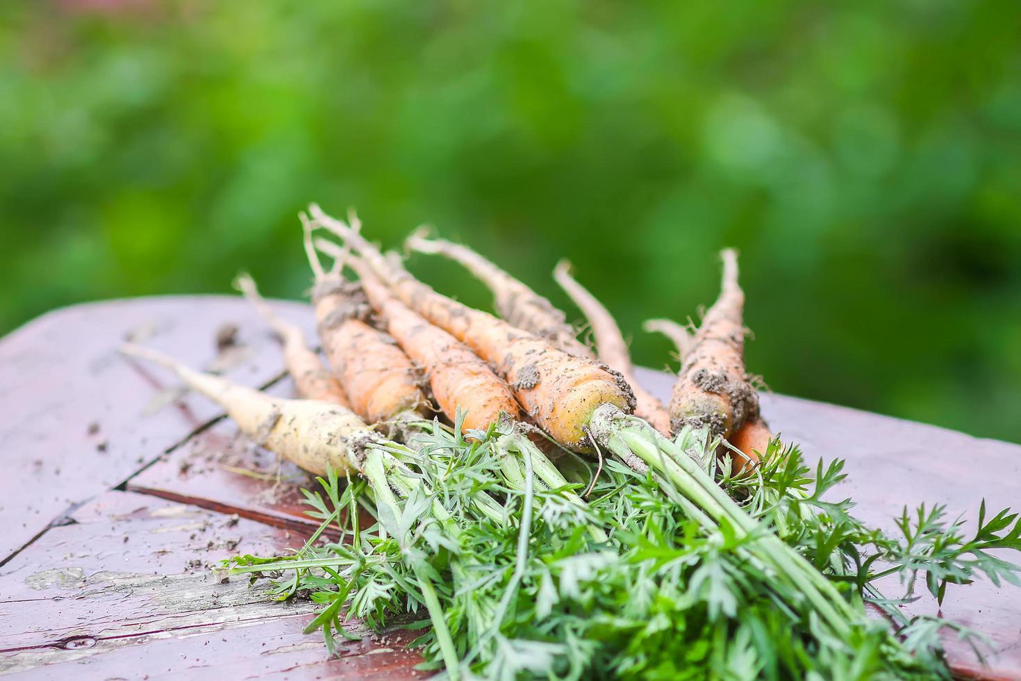 Gruppe gepflückter Karotten foto