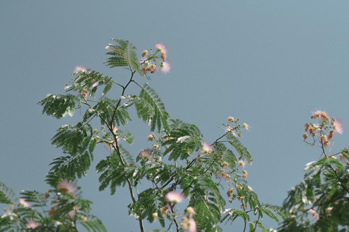 tropischer Baum gegen blauen Himmel foto