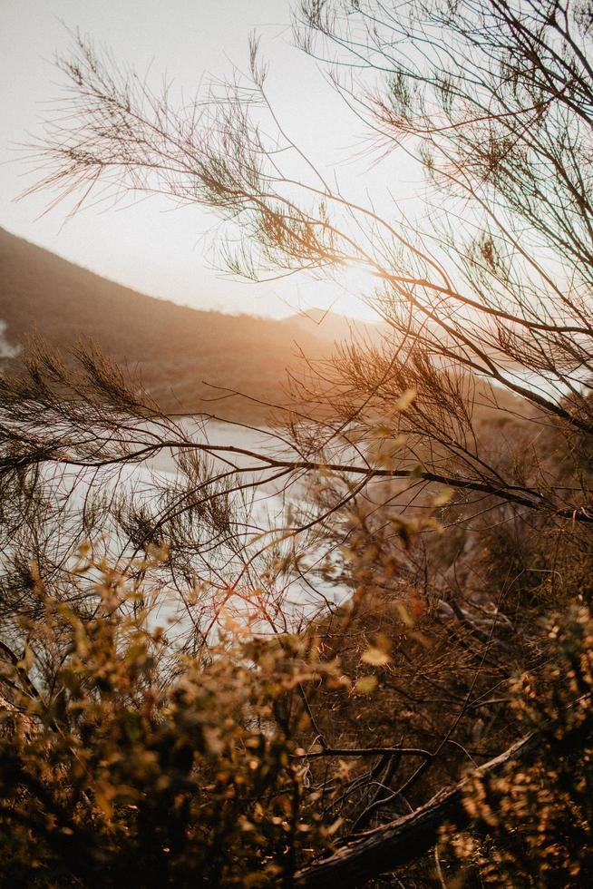 goldene Stunde in Shoal Bay foto
