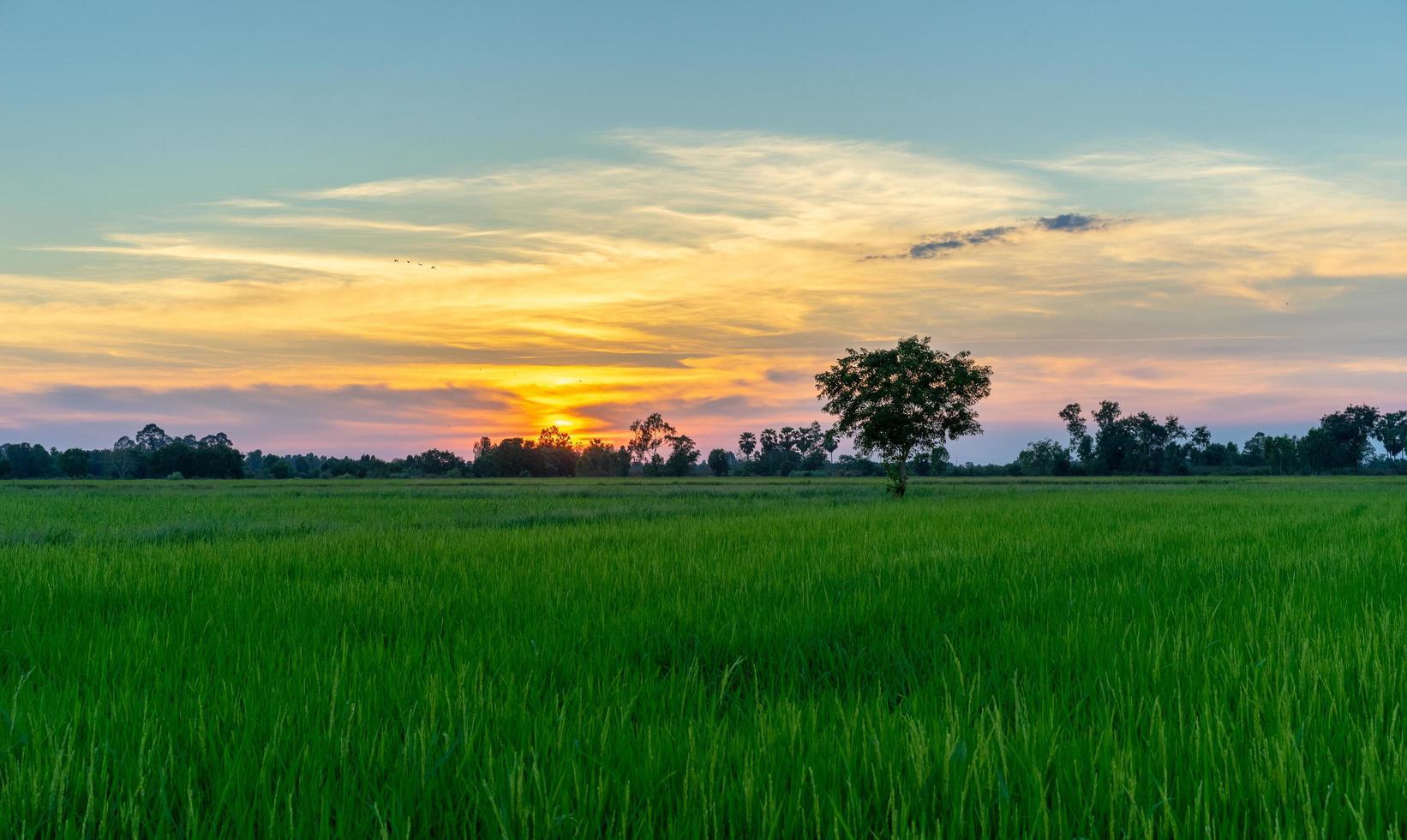 Baum auf der grünen Wiese bei Sonnenuntergang foto