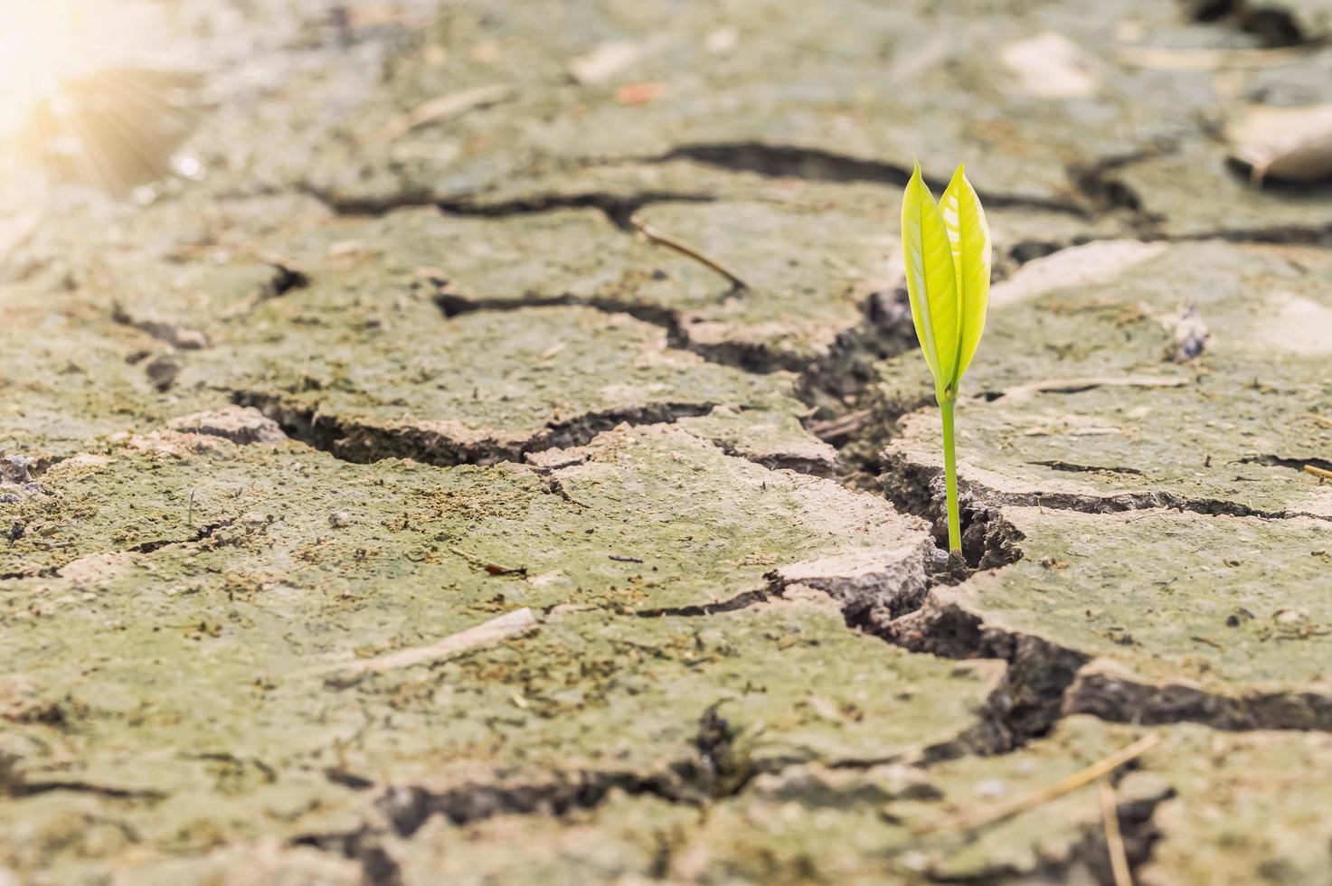 Pflanze in den trockenen Boden foto
