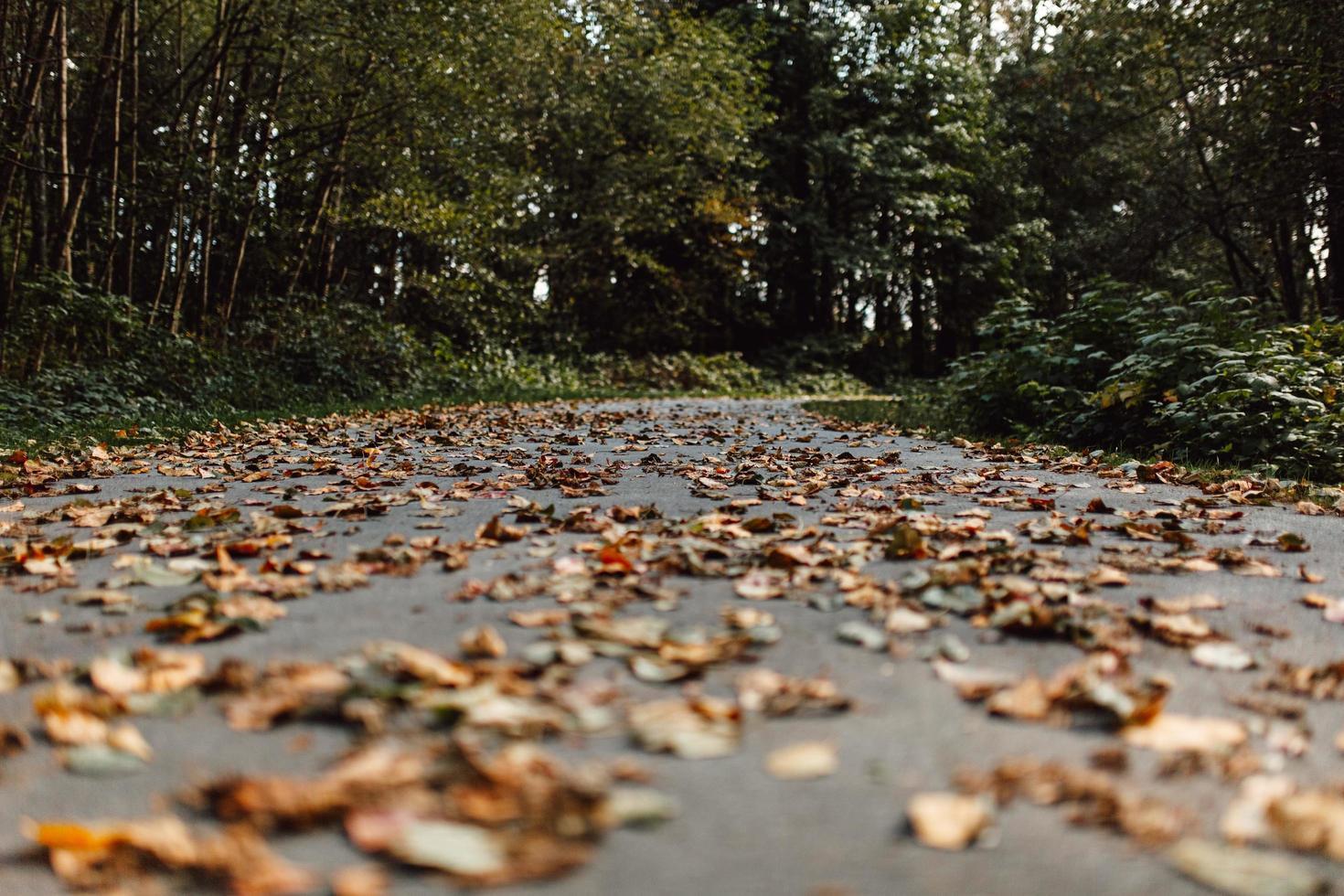 Wurmperspektive von getrockneten braunen Blättern foto