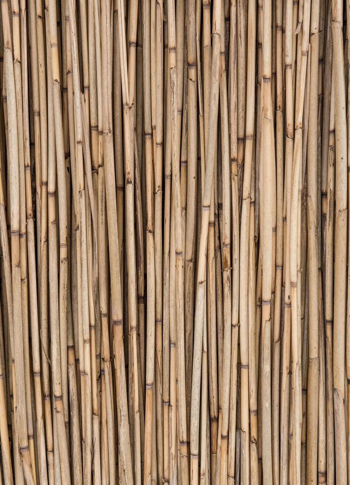 Nahaufnahme von Bambusstöcken foto