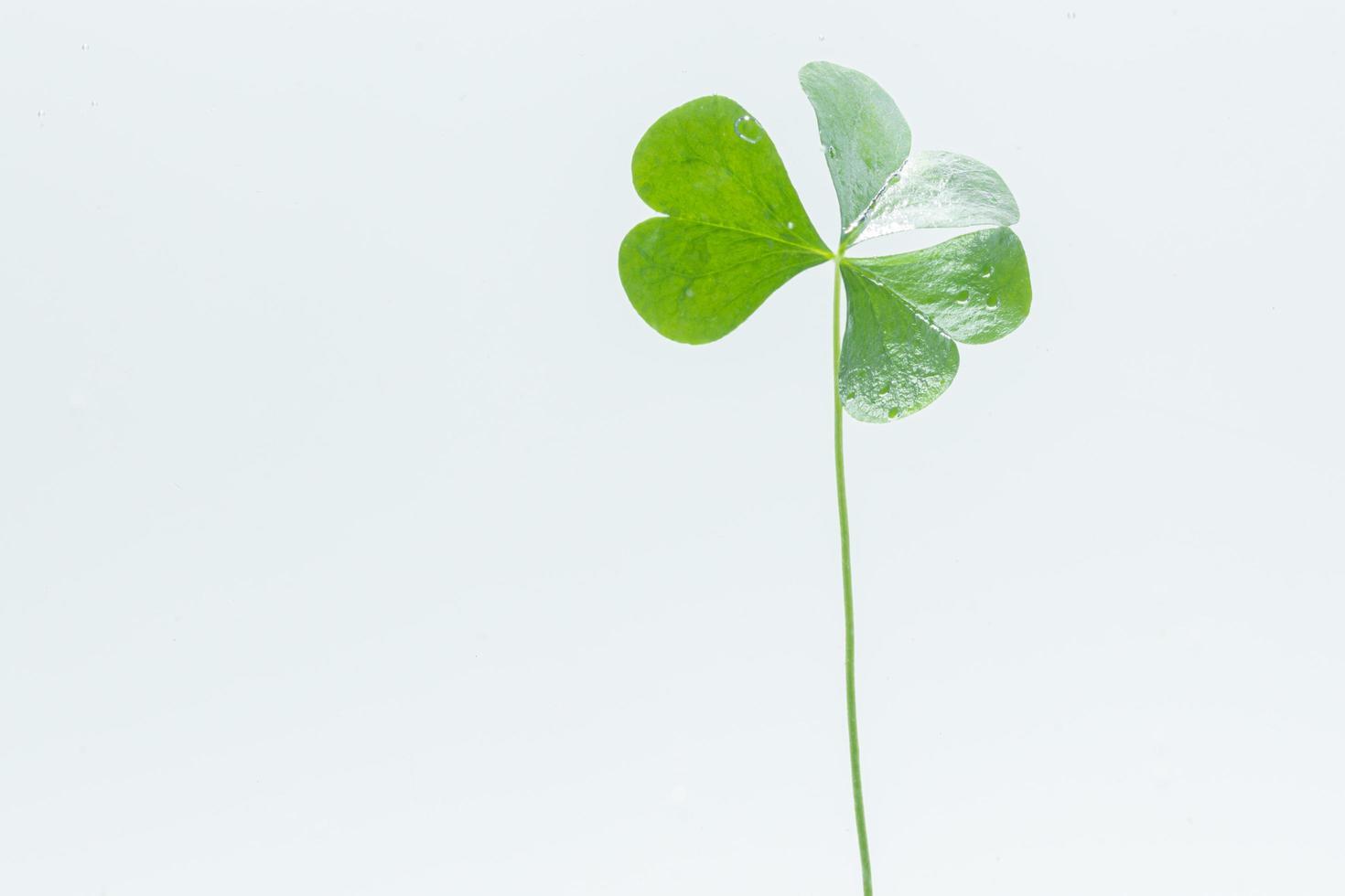 grüne Pflanze im Wasser foto