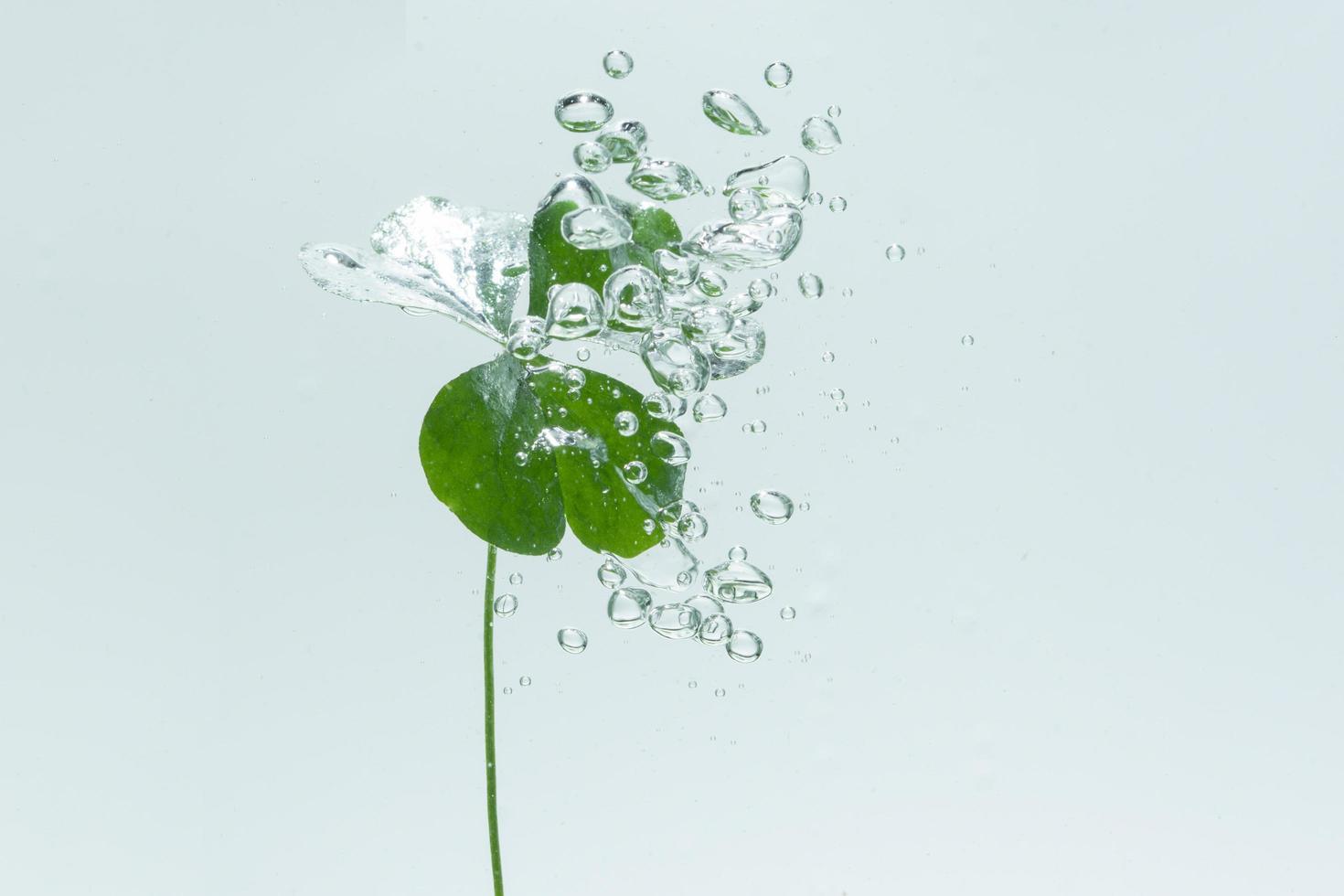 grüne Pflanze und Blasen im Wasser foto