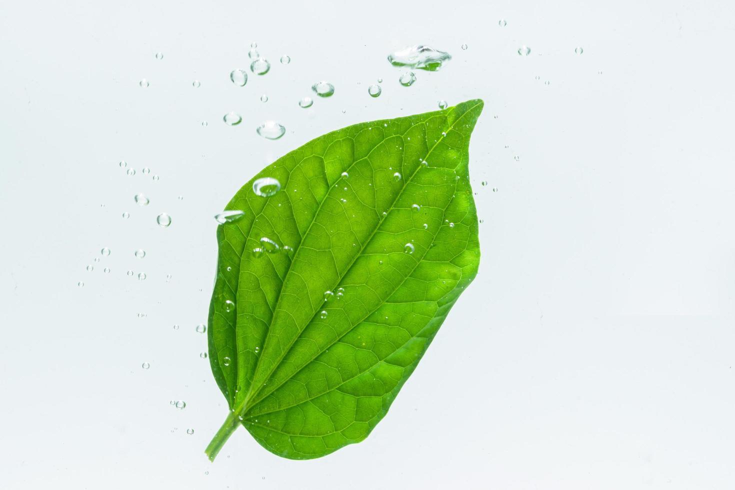 grünes Blatt und Blasen im Wasser foto