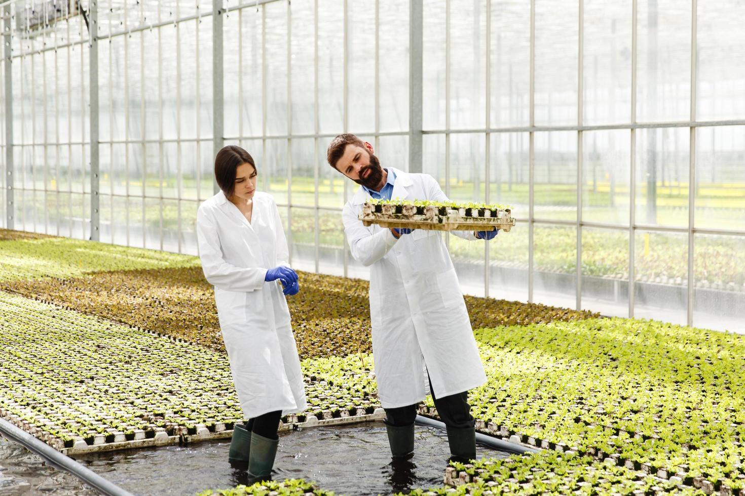 Mann und Frau in Laborgewändern in einem Gewächshaus foto