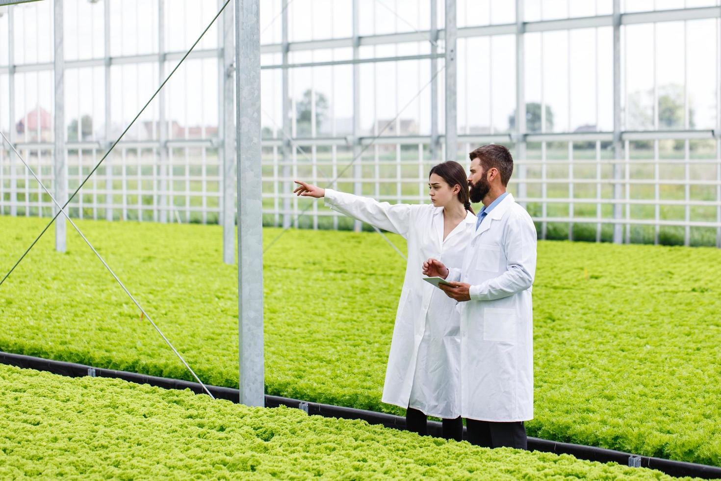 Zwei Forschungen von Mann und Frau untersuchen das Grün mit einer Tablette in einem rein weißen Gewächshaus foto