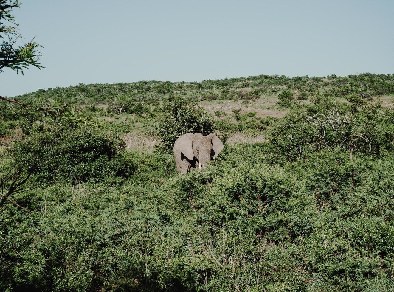 Elefant steht in der Nähe von Bäumen foto