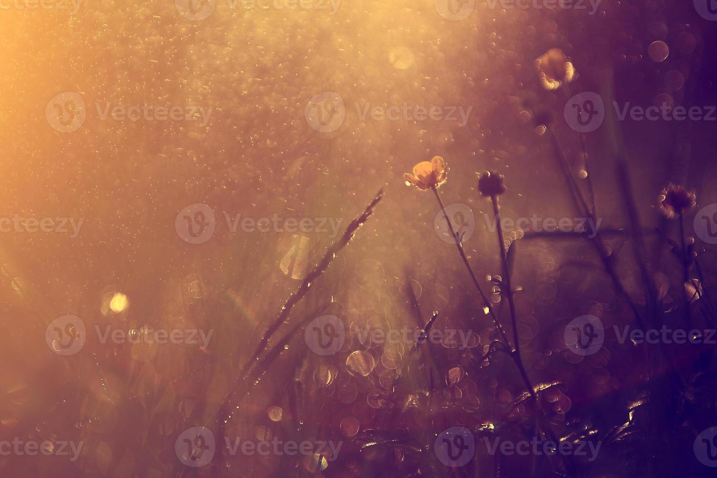 Vintage Blume im Regen foto