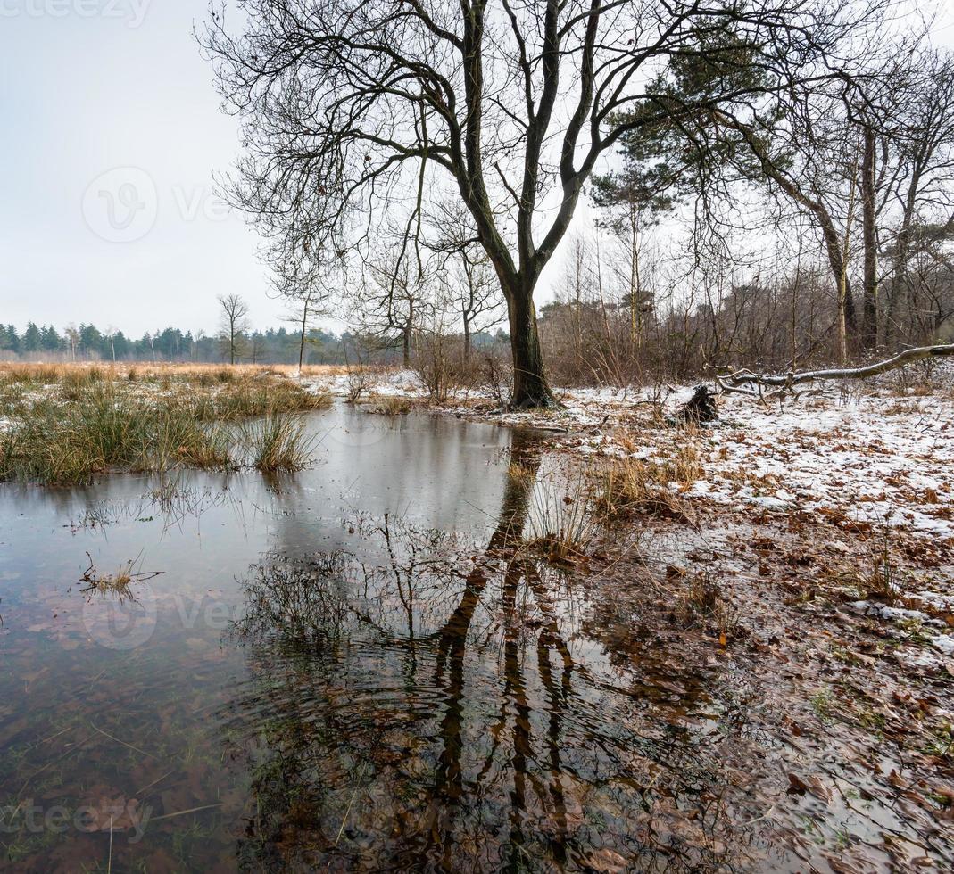 Silhouette eines kahlen Baumes, der im Winter reflektiert wird foto