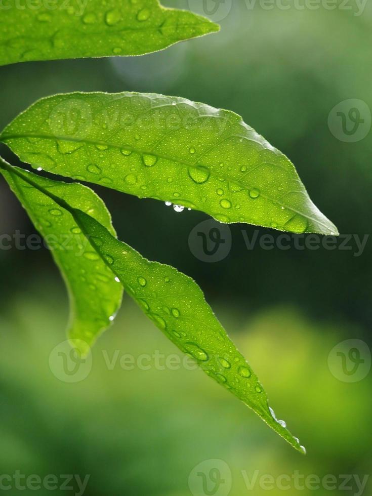 Regentropfen auf Blatt foto