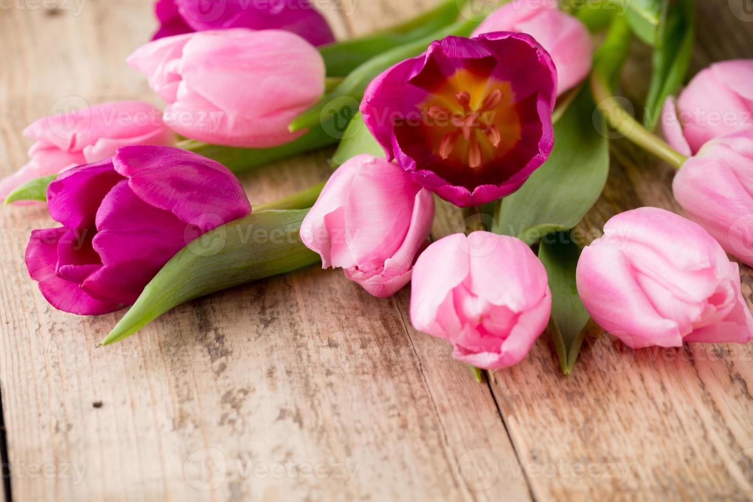 Tulpe. foto