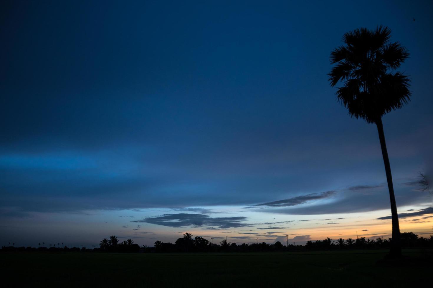 Silhouette einer Palme bei Sonnenuntergang foto