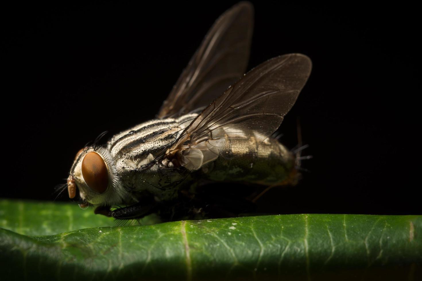 auf einem Blatt fliegen foto