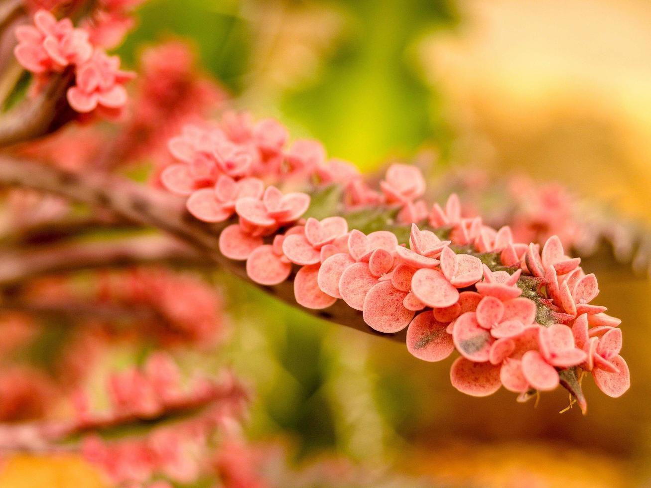 Kaktuswüstenpflanze in leuchtendem Rosa foto
